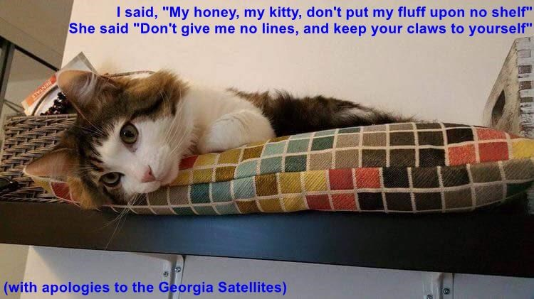 """I said, """"My honey, my kitty, don't put my fluff upon no shelf""""                                         She said """"Don't give me no lines, and keep your claws to yourself""""  (with apologies to the Georgia Satellites)"""