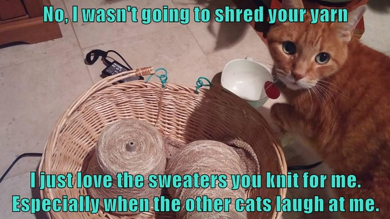 No, I wasn't going to shred your yarn  I just love the sweaters you knit for me.  Especially when the other cats laugh at me.