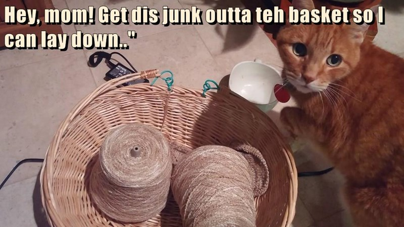 cat out get down caption mom lie basket junk