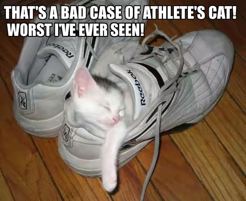 bad cat seen case athletes worst - 8972375808