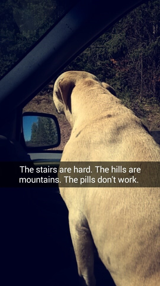 Snout - The stairs are hard. The hills are mountains. The pills don't work.