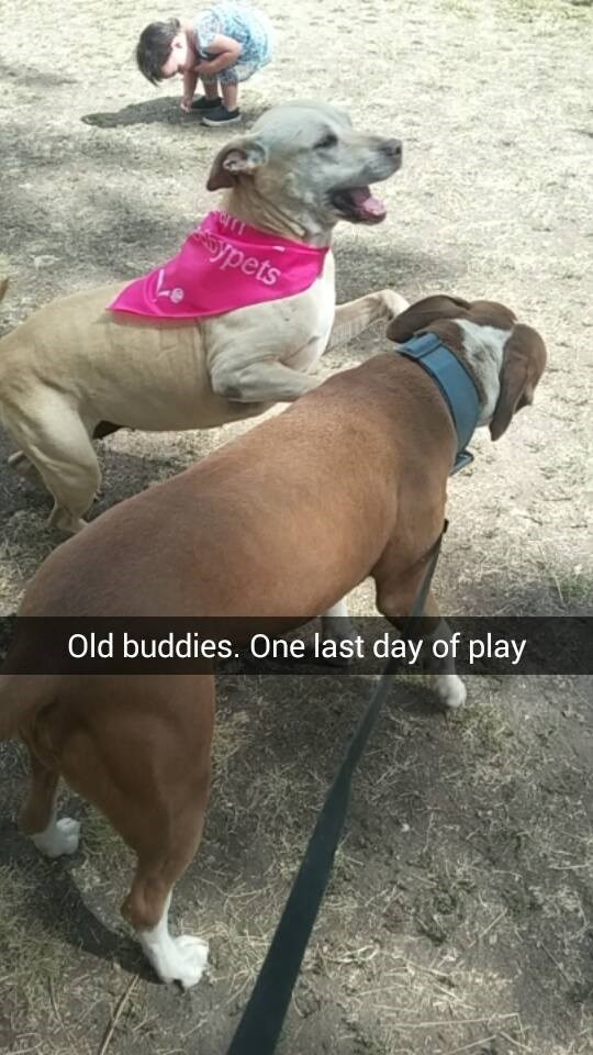 Dog - ypets Old buddies. One last day of play
