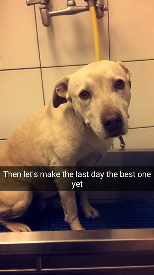 Dog breed - Then let's make the last day the best yet