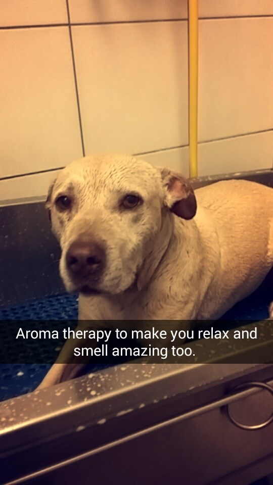 Dog - Aroma therapy to make you relax and smell amazing too.