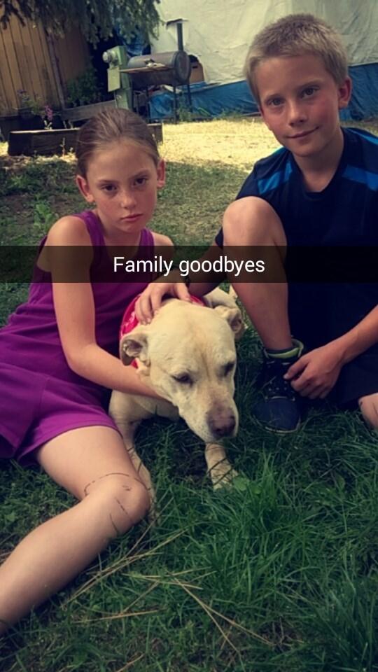 Dog - Family goodbyes