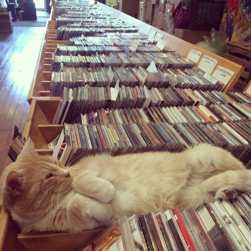 got any cat stevens