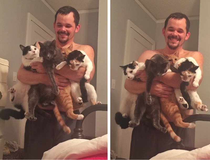 behold the extremely rare quadruple cat scoop