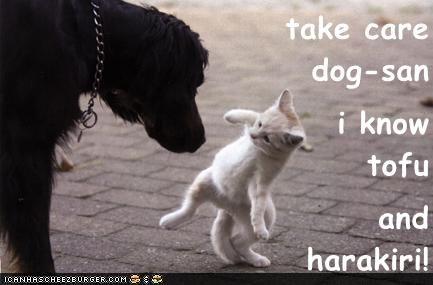 take care                                       dog-san i know                              tofu and                                                 harakiri!