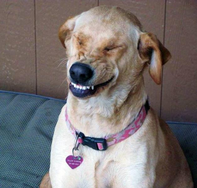 sneeze sneezing dogs funny