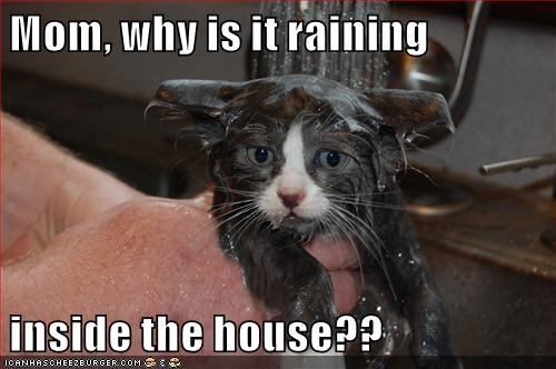 Mom, why is it raining  inside the house??
