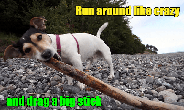 Big Stick Dogplomacy
