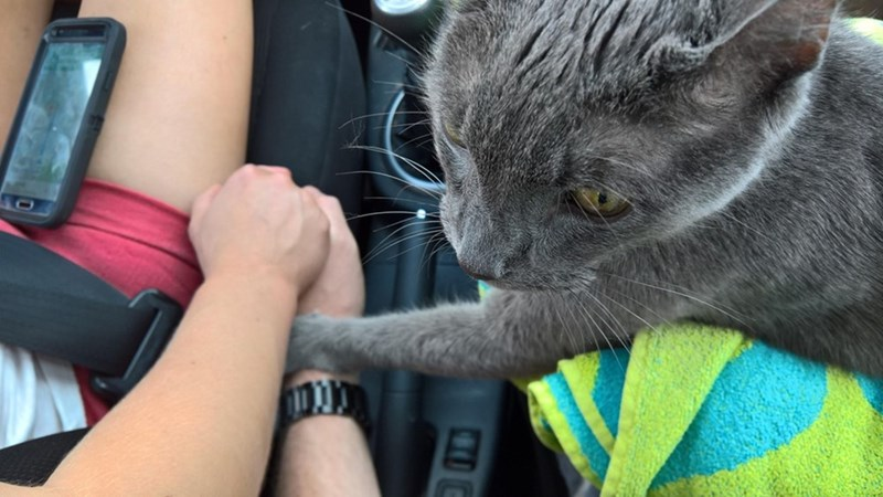 this cat held hands with his humans on their way to the vet for the last time