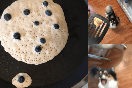 when you realize your human made you a tiny blueberry pancake