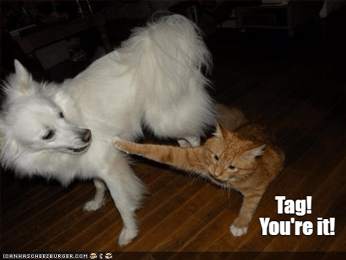 cat dogs it caption tag youre - 8972686848