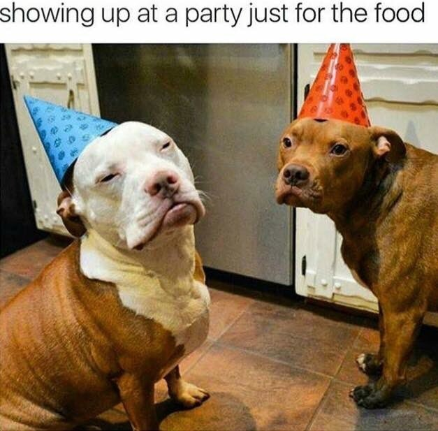 happy birthday meme with dogs wearing birthday party hats