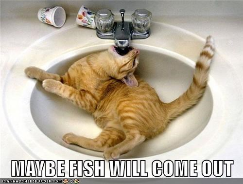 cat out come maybe caption fish - 8972723712