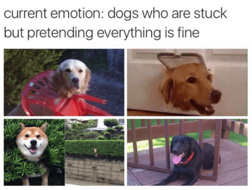 image dogs memes same