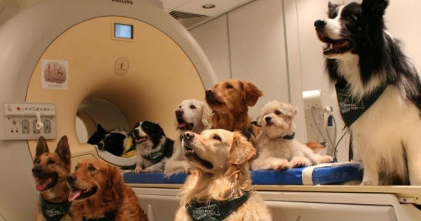 new experiment proves that dogs can actually understand what were saying