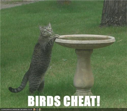 cat birds cheat caption - 8972796928
