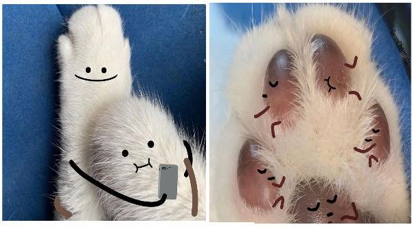 funny cat art, cat paws, cat beans