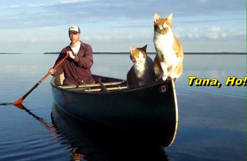 Tuna, Ho!