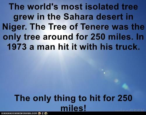 The world's most isolated tree grew in the Sahara desert in Niger. The Tree of Tenere was the only tree around for 250 miles. In 1973 a man hit it with his truck.  The only thing to hit for 250 miles!