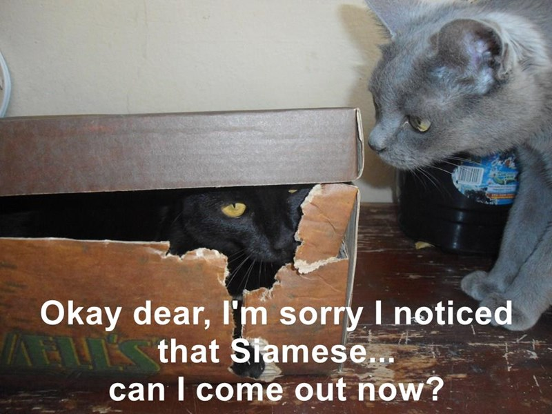 Okay dear, I'm sorry I noticed that Siamese...                                    can I come out now?
