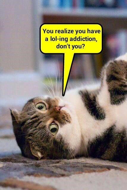 cat addiction caption realize lol-ing - 8972833536