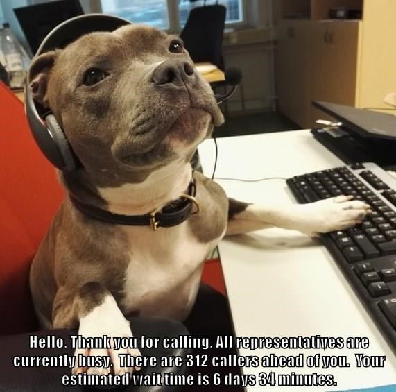 Hello. Thank you for calling. All representatives are currently busy.  There are 312 callers ahead of you.  Your estimated wait time is 6 days 34 minutes.