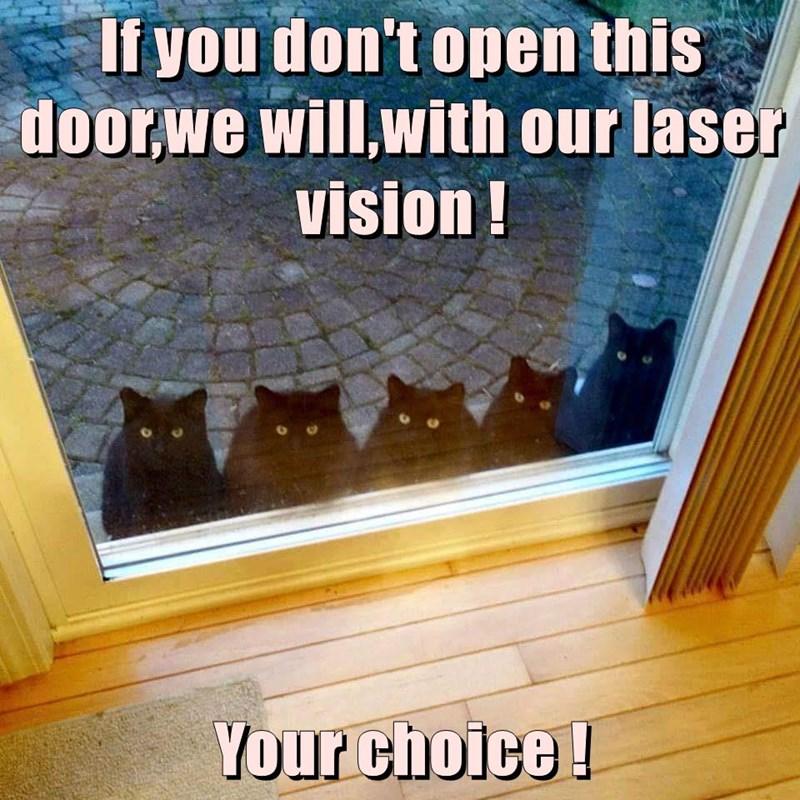 door vision open laser caption Cats - 8972952320