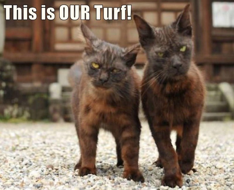 our Turf caption this Cats - 8972979968