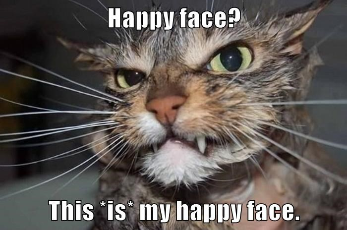 cat face happy caption
