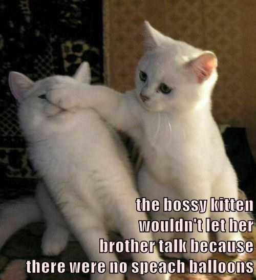 the bossy kitten                                      wouldn't let her                                        brother talk because                                           there were no speach balloons