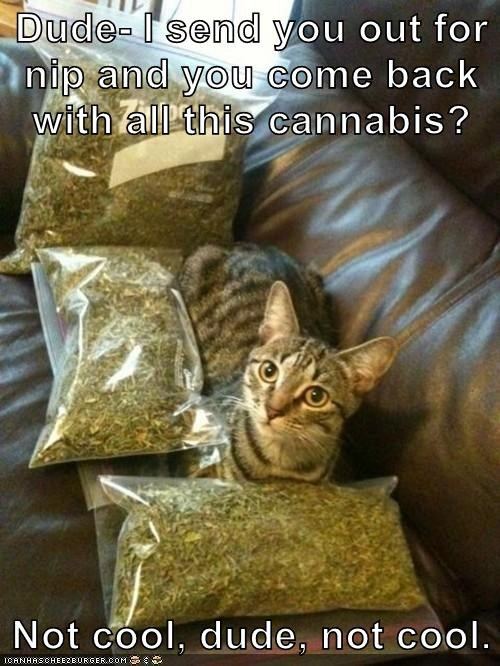 Dude- I send you out for nip and you come back with all this cannabis?  Not cool, dude, not cool.