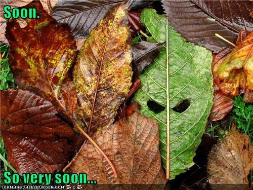 Soon.   So very soon...