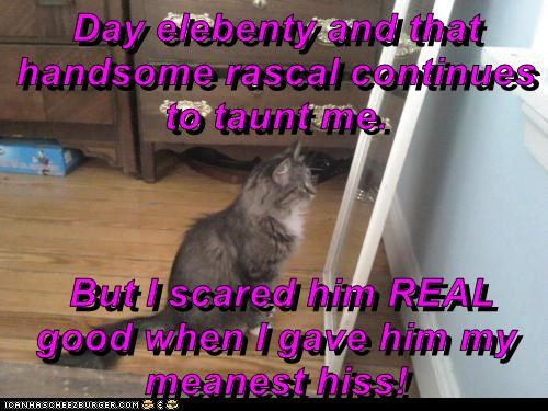 Day elebenty and that handsome rascal continues to taunt me. But I scared him REAL good when I gave him my meanest hiss!