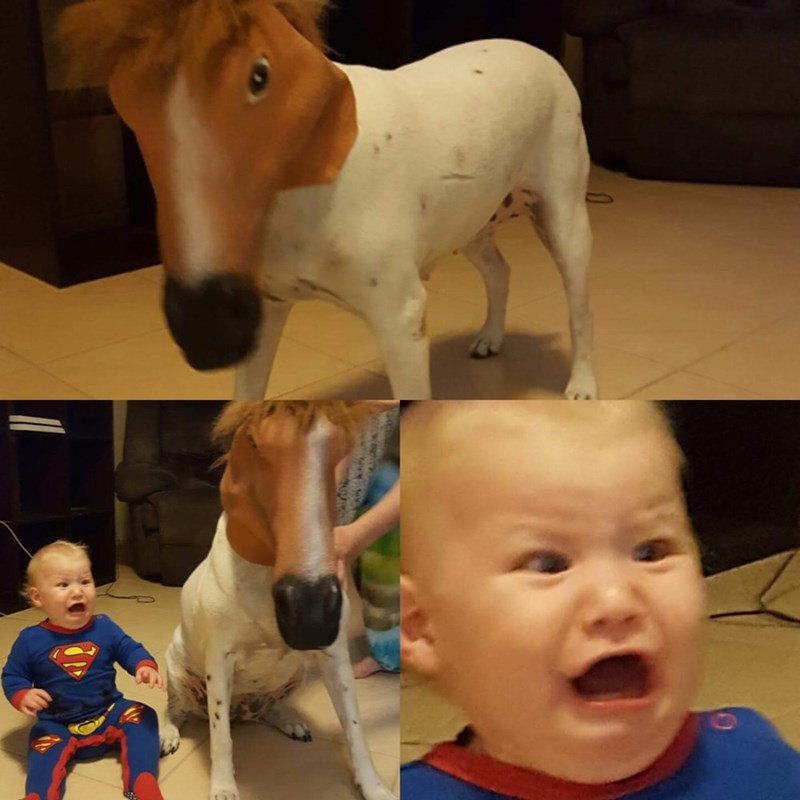dogs,kids,horse mask,parenting,horse