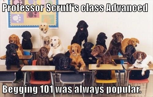 Professor Scruff's class Advanced   Begging 101 was always popular.