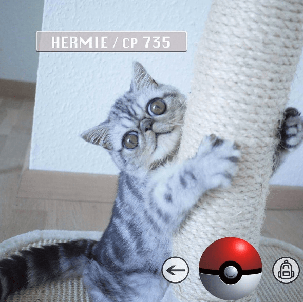 herman the cat - Cat - HERMIE CP 735 CO