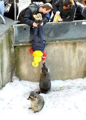 parenting,racoon,zoo