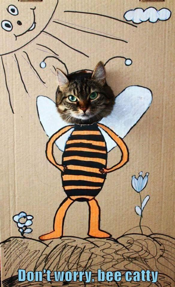 lolcats - Cartoon - Don t worry. bee catty