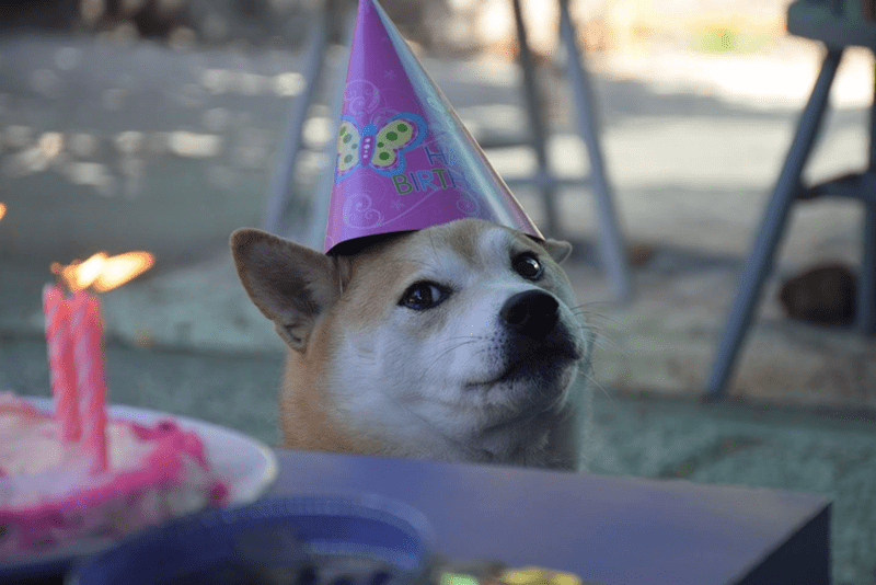 much candle so birthday wow