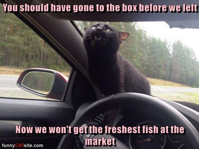 You should have gone to the box before we left  Now we won't get the freshest fish at the market