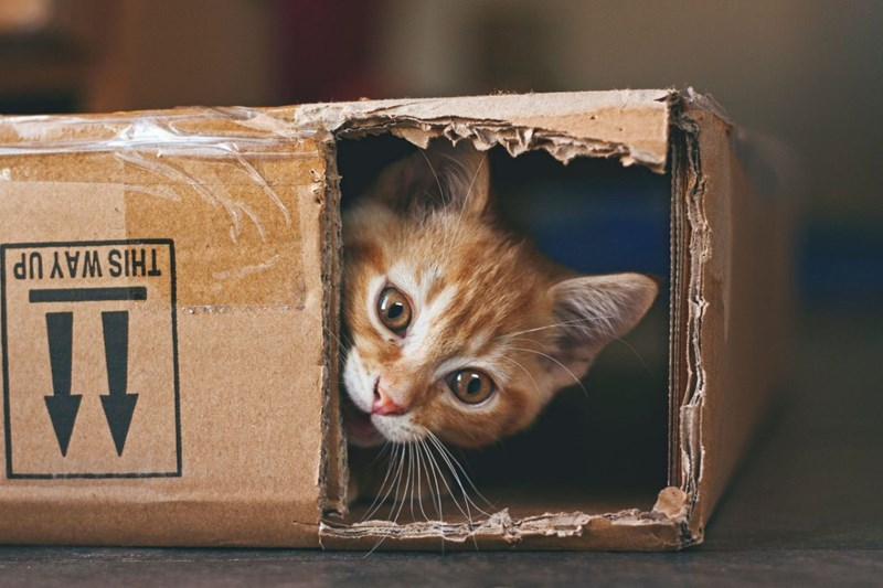 cats cardboard boxes quality