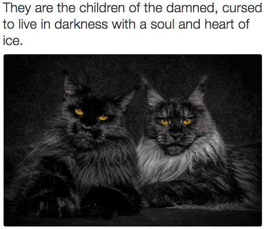 metal cat - Cat - They are the children of the damned, cursed to live in darkness with a soul and heart of ice.