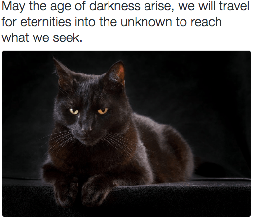 metal cat - Cat - May the age of darkness arise, we will travel for eternities into the unknown to reach what we seek.