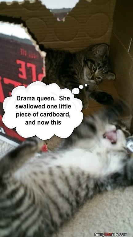 swallowed kitten Drama Queen caption cardboard - 8974201600