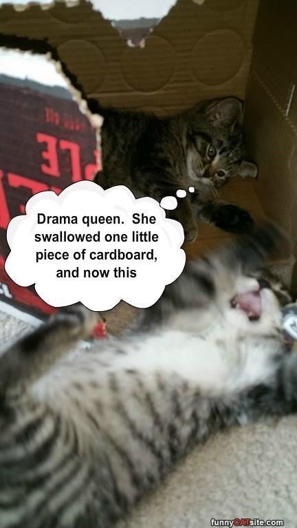 swallowed kitten Drama Queen caption cardboard - 8974201600