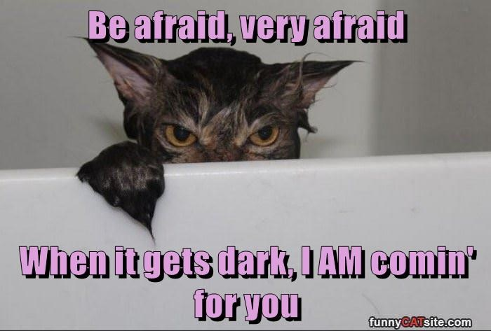 you cat be afraid caption dark coming - 8974209536