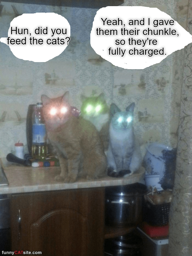 There are good cat parents, and there are great cat parents.